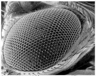 Oeil de mouche