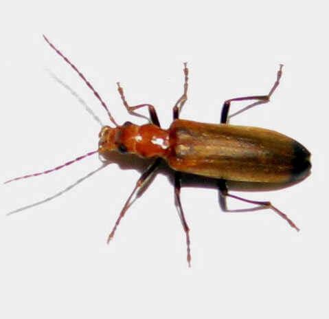 Le nacerde insecte du bois for Insecte du bois maison