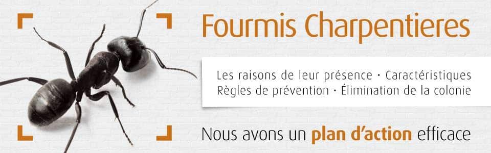 Dossier Fourmis