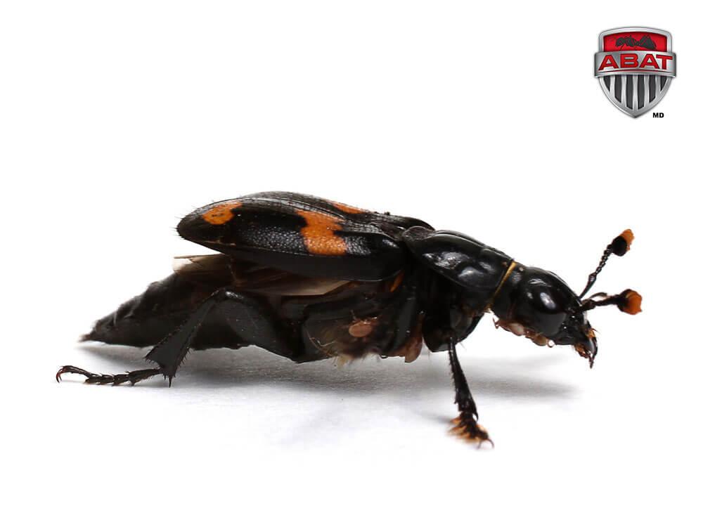 Insectes for Bete qui mange le bois