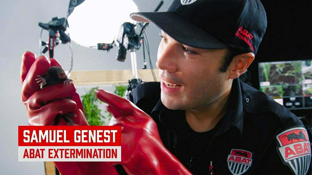 extermination inspection pré achat